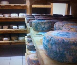 GAEC Albertini. Fromages fermiers de brebis à Pietracorbara.