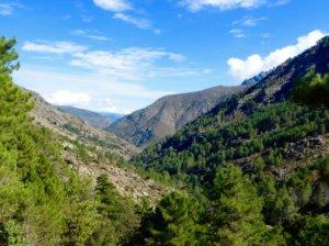 Forêt de pin laricio à Asco