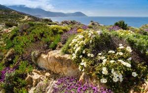 Fleurs et maquis, La Revellata, Calvi - Balagne Corse, Intimu