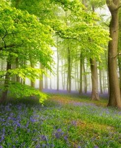 Santé, beauté et bien-être avec l'aromathérapie