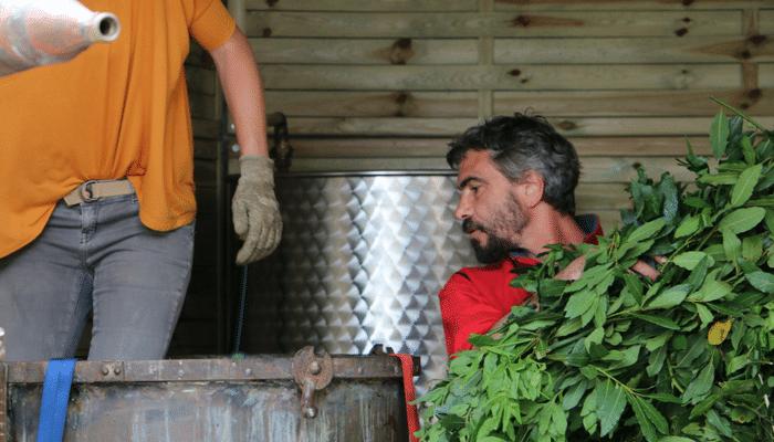 Fabrication d'huiles essentielles et d'hydrolat en Corse par Intimu