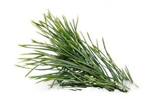 Huile essentielle bio de pin laricio