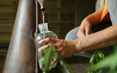 Guide pratique des hydrolats BIO