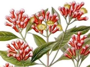 Huile essentielle de bois de rose dans le soin des peaux sèches Intimu