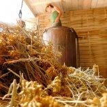 Intimu, Artisan distillateur du Cap Corse