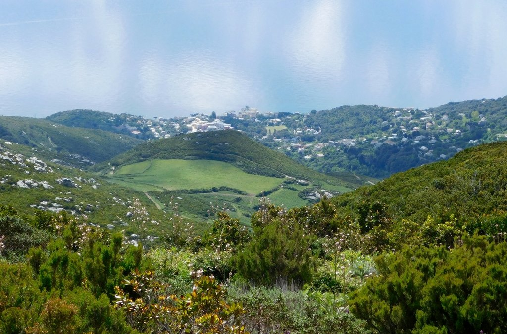 L'histoire de la première plantation d'hélichryse dans le Cap Corse