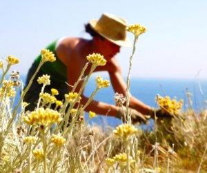 Découverte de producteurs du Cap Corse