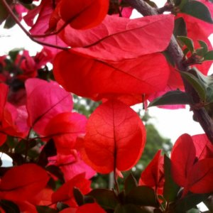 intimu.fr plantes