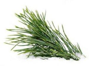 L'huile essentielle de pin laricio BIO, Lariciu, c'st chez Intimu