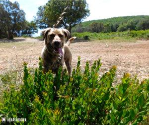Jeunes pousses de myrte vert à la pointe du Cap Corse