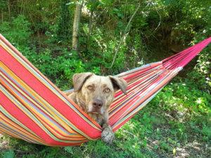 Après l'effort, le réconfort. Petite sieste à l'ombre d'un olivier.