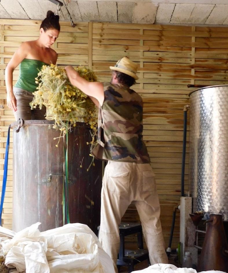 Hélène et Laurent remplissent leur cuve en cuivre de 600 litres. Suit une longue extraction pour obtenir une huile essentielle pure et complète.