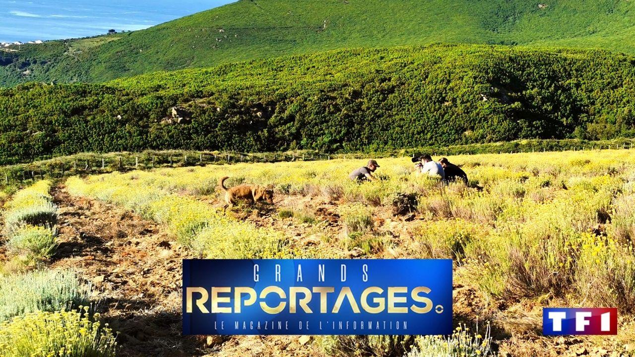 Intimu, producteur d'huiles essentielles dans le Cap Corse dans Grands Reportages